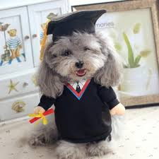 dog graduation cap and gown doctor pet costume made for pups