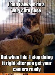 Funny Animals Meme - advice animals memes the most interesting cat in the world you