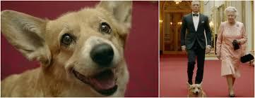queen elizabeth dog queen elizabeth and her long story with corgis