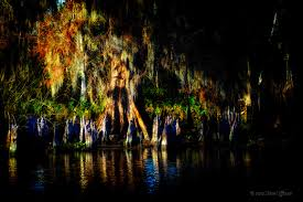 Louisiana travel light images A light in the darkness of a louisiana swamp steve and marian jpg