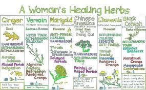 herb chart a woman s healing herbs wall chart from liz cook herbs info