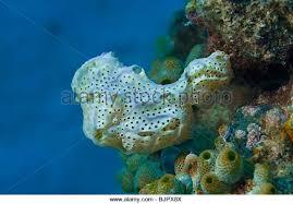 Strawberry Vase Sponge Blue Vase Sponge Stock Photos U0026 Blue Vase Sponge Stock Images Alamy