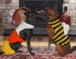 halloween costumes for yorkies dogs hooking on hump day u2013 halloween costumes bird brains u0026 dog tales