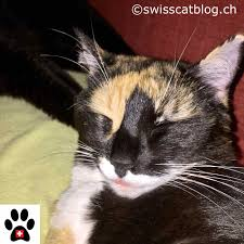 how old is your cat the swiss cats