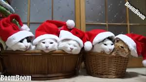 funny videos we wish you a merry christmas funny cats and dogs