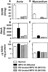 gene therapy ameliorates cardiovascular disease in dogs with