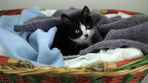 Cats In Small Spaces Video - angry cat with unhappy expression sleeping on the roof of old