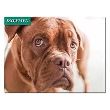 boxer dog fidget spinner online buy wholesale focus diamond from china focus diamond