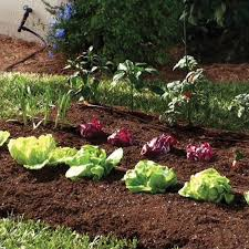 mister landscaper vegetable garden drip irrigation kit drip