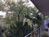 katzennetz balkon großes katzennetz für balkon terrasse in berlin reinickendorf