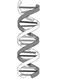 100 dna the double helix coloring worksheet transwksans png