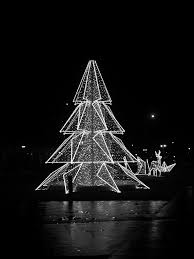free stock photo of black and white tree illumination