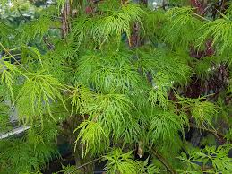 new zealand native plants and trees awa nursery why pay garden centre prices