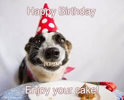 Happy Birthday Dog Meme - birthday dog happy birthday enjoy your cake imgflip meme by