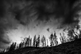 images black trees