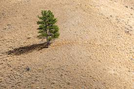Trees And Their Meanings Trees Call For Help U2014and Now Scientists Can Understand