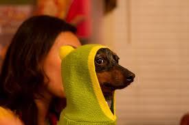 Wiener Dog Meme - my weiner dog kind of looks like snoop aww