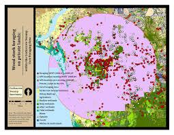 Florida Wetlands Map by Conservation Status Of Wood Storks Audubon Corkscrew Swamp Sanctuary