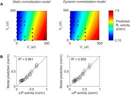 dynamic divisive normalization predicts time varying value coding