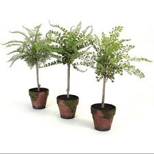 cheap decorative potted trees find decorative potted trees deals