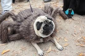 Spider Dog Halloween Costume Missed Tompkins Square Dog Halloween Parade