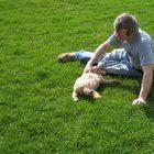 training a australian shepherd puppy how to train an australian shepherd puppy pets