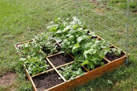home vegetable garden ideas mpelectricltda