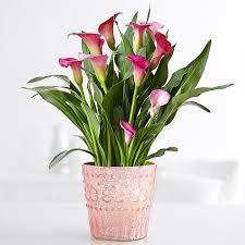 Indoor Flower Plants Indoor Plants House Plants