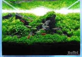 Aquarium Aquascaping Bolbi Aquarium