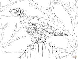 realistic california quail coloring page free printable coloring