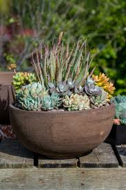 pots for succulents for sale nursery u2013 barrels u0026 branches nursery