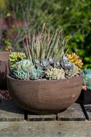 Succulents Pots For Sale by Nursery U2013 Barrels U0026 Branches Nursery