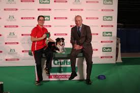 crufts australian shepherd 2014 akc usa dogs win at crufts agility competitions akc dog lovers