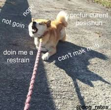 Funniest Doge Meme - pin by some guy on hm pinterest memes doge and meme