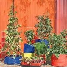 pot those veggies container vegetable gardening the old