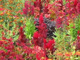free images flower decoration orange red herb color