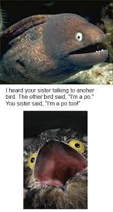 Potoo Bird Meme - this is a potoo rebrn com