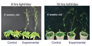 how does light affect plant growth team discovers a new plant growth technology that may alleviate