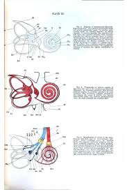 Anatomy Ear 41 Best The Anatomy Of The Senses Images On Pinterest Anatomy