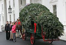 white house christmas tree wikipedia