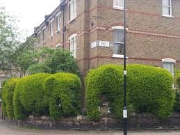 Elephant Topiary Tim Bushe Architect And Hedge Cutter U2013 Islington Faces