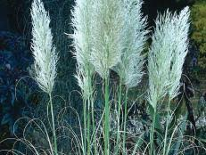 evergreen ornamental grasses for containers hgtv