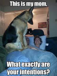 Dog In Bed Meme - 12 pictures of very jealous dogs iheartdogs com