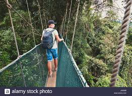 Tourist On The Elevated Walkway Through The Treetops In Rainforest