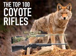 Can Coyotes See Red Light The Best Coyote Gun 100 Top Varmint Rifles Predator Calibers