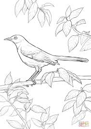 bird coloring pages printable funycoloring