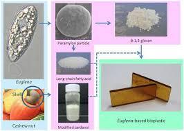 bioplastic research paper of euglena based bioplastics
