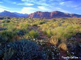 mojave desert native plants the mojave desert las vegas travel to eat
