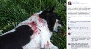 sheriff u0027s officials dog bitten not shot in lancaster backyard