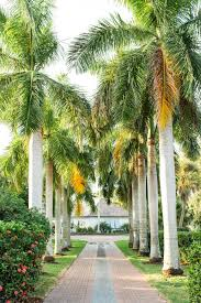 mature palm trees standing 30 feet tall line the driveway and